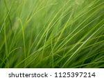 grass art background   Shutterstock . vector #1125397214