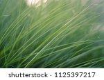 grass art background   Shutterstock . vector #1125397217