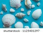 water shell art background   Shutterstock . vector #1125401297