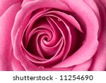 Pink Rose With Few Drops Of...