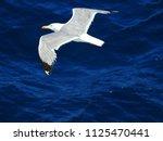 photo of greek sea gull flying... | Shutterstock . vector #1125470441