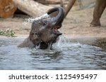 Stock photo young indian elephant in the water 1125495497