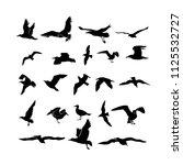 Set Of Sea Gull  Seabird Flyin...