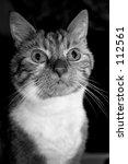 charlie | Shutterstock . vector #112561