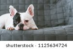 black white face french bulldog ... | Shutterstock . vector #1125634724