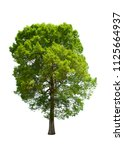 isolated tree on white... | Shutterstock . vector #1125664937