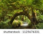 bending tree full of green... | Shutterstock . vector #1125676331