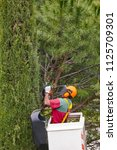 equiped worker pruning a tree... | Shutterstock . vector #1125709301