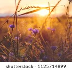 summer scene with  cornflower... | Shutterstock . vector #1125714899