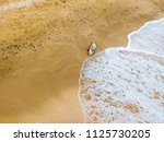 dead dolphin thrown out of the... | Shutterstock . vector #1125730205
