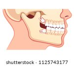 human jaws model with teeth row.... | Shutterstock .eps vector #1125743177