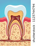 grinder tooth  gum   scull... | Shutterstock .eps vector #1125744794