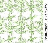 outline green pinnate leaves on ... | Shutterstock .eps vector #1125747599