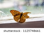 Butterfly With Broken Wing.
