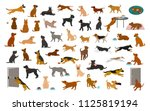 Stock vector different dog breeds and mixed set pets play running jumping eating sleeping sit lay down and 1125819194