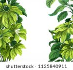 tropical leaf frame isolated on ... | Shutterstock .eps vector #1125840911