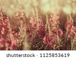 landscape with blooming wild... | Shutterstock . vector #1125853619