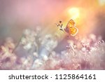 Stock photo golden butterfly glows in the sun at sunset macro wild grass on a meadow in the summer in the 1125864161