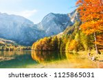 colorful autumn trees on the... | Shutterstock . vector #1125865031