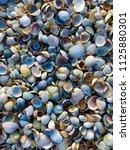 shells on the beach  shells...   Shutterstock . vector #1125880301