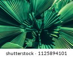 tropical palm leaf  large green ... | Shutterstock . vector #1125894101