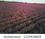 meadow of lavender at sunset.... | Shutterstock . vector #1125918605