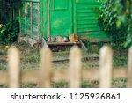 resting relax two quiet cat... | Shutterstock . vector #1125926861
