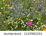 close up of colourful mixed... | Shutterstock . vector #1125982331