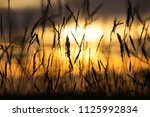 silhouette of grass in front of ... | Shutterstock . vector #1125992834