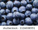 Blueberry Blueberrys Summer