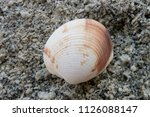 Shell On Beach  Background Stone