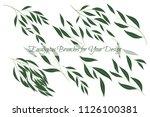 eucalyptus branch. decorative... | Shutterstock .eps vector #1126100381