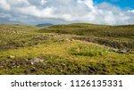 rolling hills of the scottish... | Shutterstock . vector #1126135331