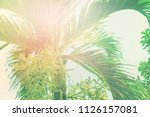 tropical background palm trees... | Shutterstock . vector #1126157081