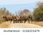 elephants crossing dirt road ... | Shutterstock . vector #1126221674