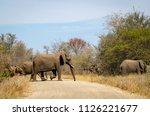 elephants crossing dirt road ... | Shutterstock . vector #1126221677