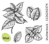 mint vector set. hand drawn... | Shutterstock .eps vector #1126242374