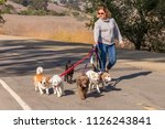 Stock photo professional female dog walker walking a pack of small dogs on park trail 1126243841
