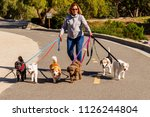 Stock photo professional female dog walker walking a pack of small dogs on a bike trail 1126244804