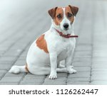 close up portrait of cute small ... | Shutterstock . vector #1126262447