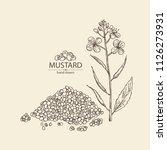 mustard  plant  mustard seeds ... | Shutterstock .eps vector #1126273931