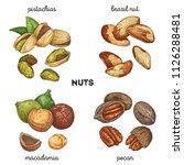 pistachios  brazilnut ... | Shutterstock .eps vector #1126288481