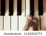 Stock photo cats paws lying on the piano keys close up cat playing retro vintage image 1126316771
