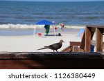 mourning dove bird perched on... | Shutterstock . vector #1126380449