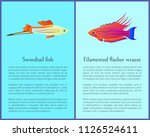 filamented flasher wrasse and...   Shutterstock .eps vector #1126524611