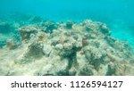 underwater  grim view of... | Shutterstock . vector #1126594127