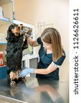 the medicine  pet care and love ... | Shutterstock . vector #1126626611