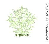 vector nature emblem. art line... | Shutterstock .eps vector #1126974134