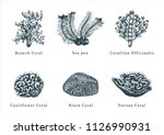 vector illustrations of corals. ... | Shutterstock .eps vector #1126990931
