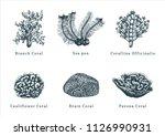 vector illustrations of corals. ... | Shutterstock .eps vector #1126990931